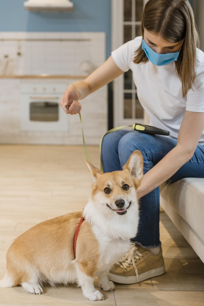 Take proper care of your pet always