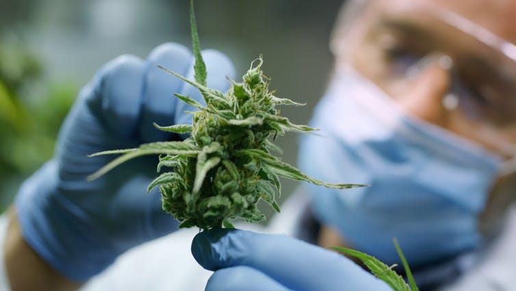 The Benefits of Marijuana