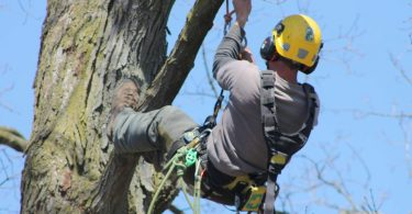 Benefits of hiring a professional and experienced arborist